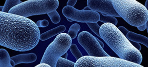 microbes1